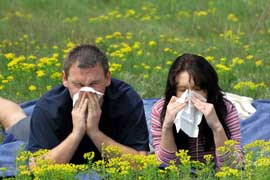 про сезонную аллергию